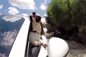 Dog Car