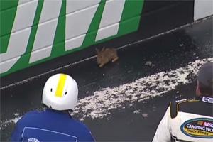 NASCAR Rabbit